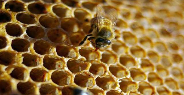 Diabetes y miel