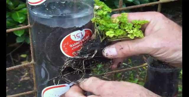 Creando un jard n vertical con botellas de pet for Reja para jardin vertical