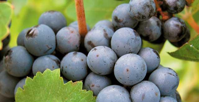 Beneficios uva salud