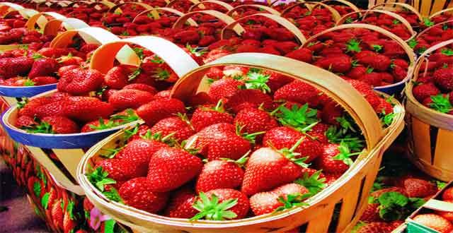 Incluir fresas dieta