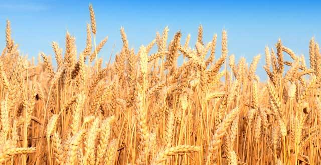 Dependencia cultivos futuro