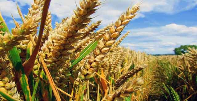 Diversidad cultivos mundo