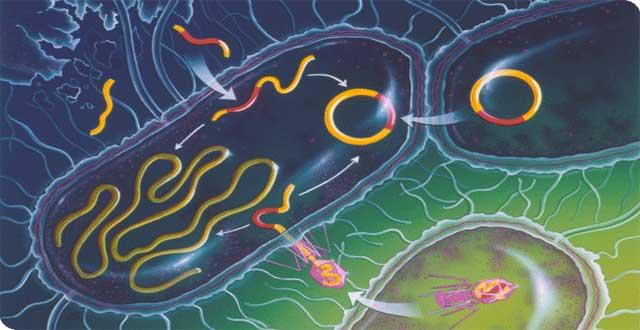 OMS antibioticos resistencia