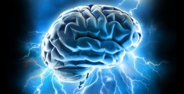 Grasas envejecimiento cerebro