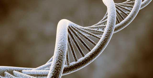 ADN cambios genetica