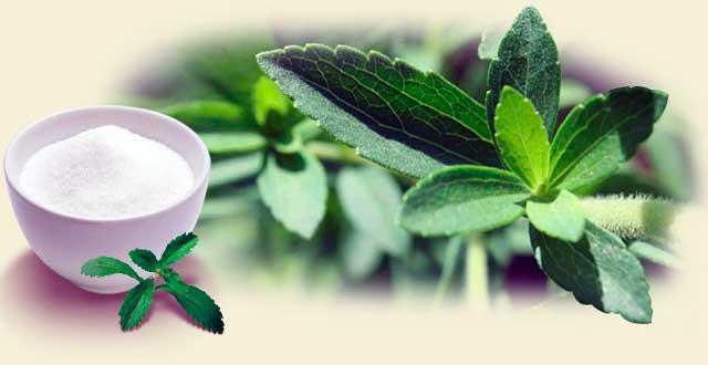 Efectos stevia organismo