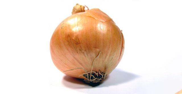 Bulbo cebolla enfermedades
