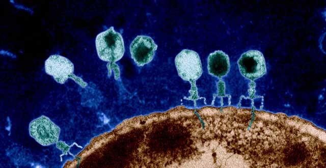 Mecanismo resistencia antibioticos
