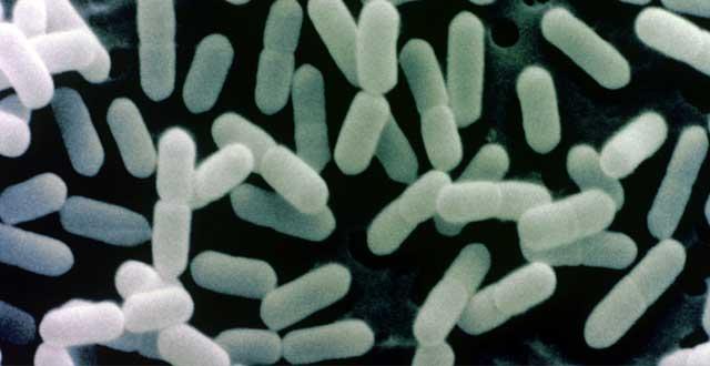 Adaptabilidad Listeria Monocytogenes