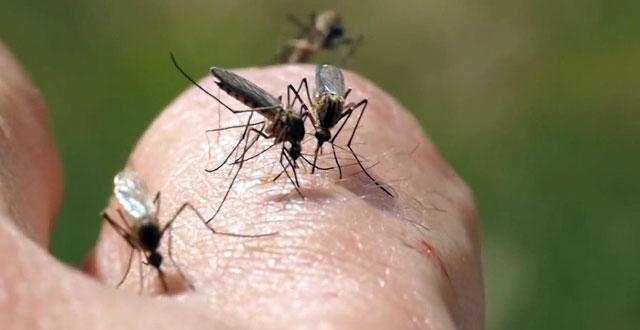 Conoce sobre zika